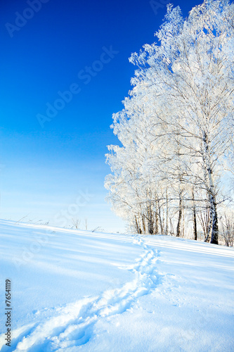 Foto-Kuscheldecke premium - winter landscape a with the blue sky, a  footpath  and the fores (von yanikap)