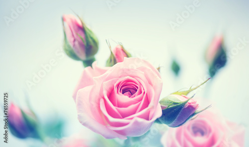 Foto op Aluminium Roses Beautiful pink roses. Vintage styled card design