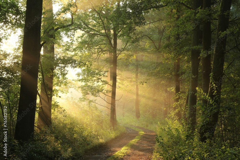 Country road through the forest on a foggy spring morning