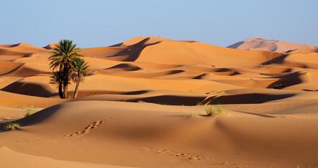 Fototapeta Pustynia Piaszczysta Morocco. Sand dunes of Sahara desert