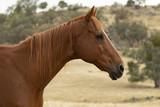 Koń z profilu