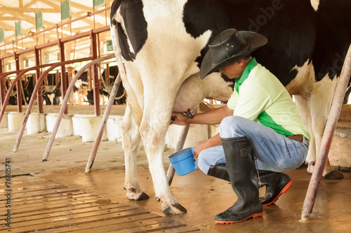 Photo Workers are milking the cows by hand.