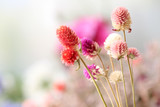 Beautiful dried flowers on bright background - 76611534
