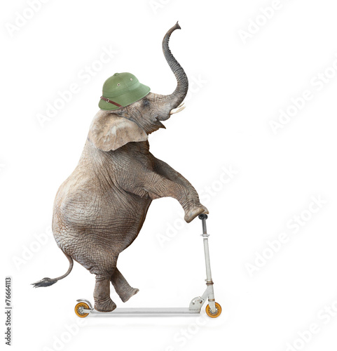 Funny elephant with protective helmet riding push scooter. Wallpaper Mural