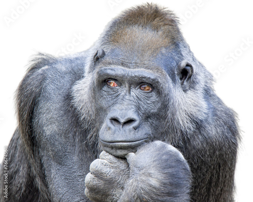 Photo  Contemplative Gorilla