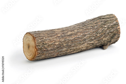 Fotografia  willow log isolated
