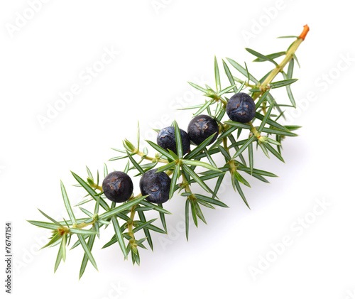 Fototapeta Juniper berries obraz
