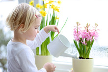 Little Girl Giving Water To Flowers On The Window
