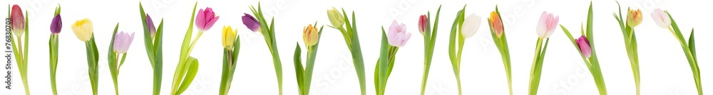 Banner of tulips