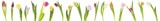 Fototapeta Tulipany - Banner of tulips