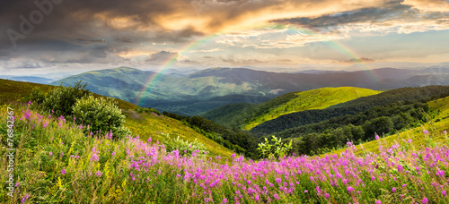 wild flowers on the mountain top Wallpaper Mural
