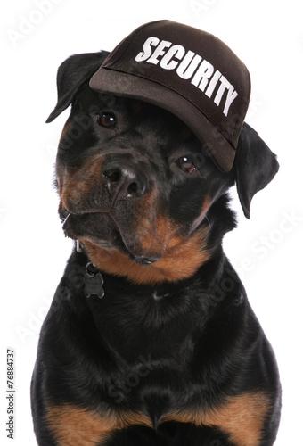 Vászonkép Rottweiler security