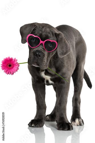szczeniak-w-rozowych-okularach-z-kwiatem-w-zebach