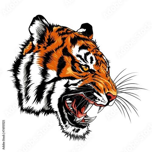 Fototapeta premium wściekła głowa tygrysa
