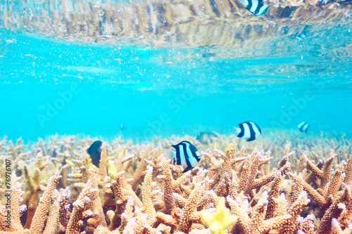 Foto op Canvas Onder water Coral reef at Maldives