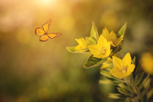 Photo Of Yellow Wildflower And Butterfly