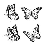 Set of Realistic Colorful Butterflies Isolated for Spring