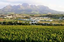 Weinanbau In Stellenbosch - Südafrika