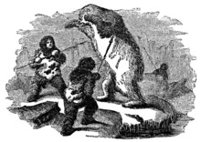 Victorian Engraving Of Inuit Hunting Polar Bear