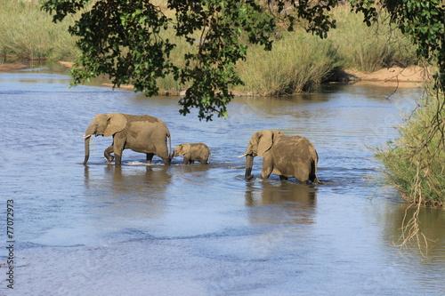 In de dag Zuid Afrika Elefantenfamilie durchquert Fluß Krüger Nationalpark Südafrika