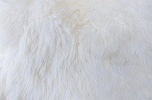 Fur Texture As Background