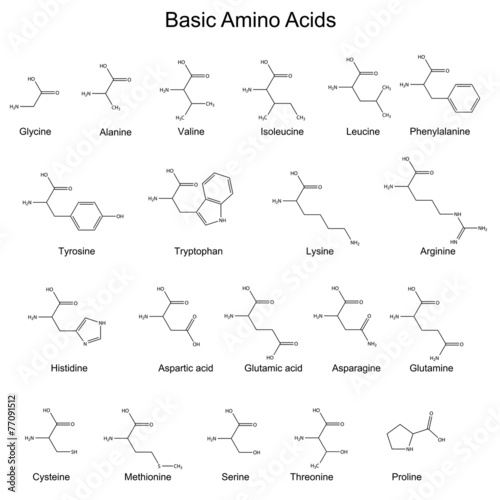 Photo Skeletal structures of basic amino acids