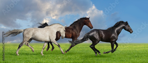 Group of three horse run gallop on gree grass against beautiful
