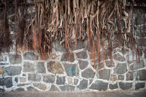 Photo  Banyan tree root growing against a stone wall, Hong Kong