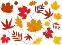 Laubblätter Im Herbst