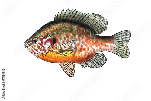 River fish Canvas-taulu