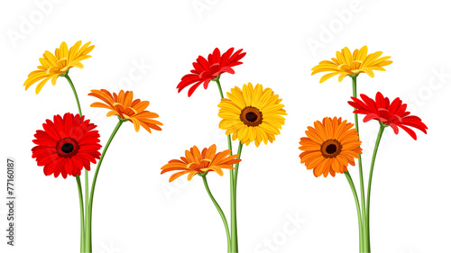 Fotografie, Obraz Gerbera flowers. Vector illustration.