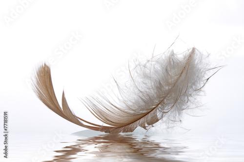 Feder auf Wasser
