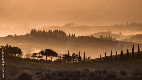 Fotografie, Obraz  Cypress hills and Fog in Tuscany
