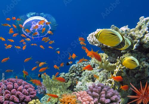 plakat Koral i ryby w Morzu Czerwonym. Egipt