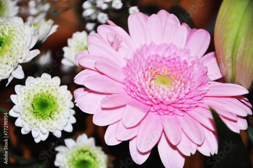 Papiers peints Lilas Pink flower