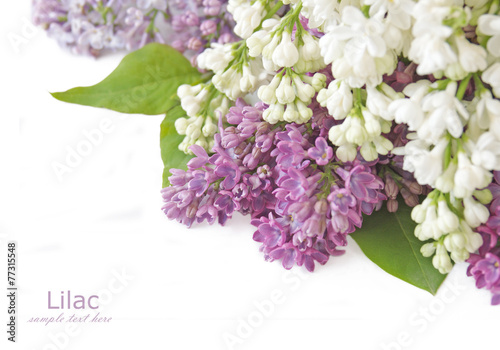 Foto op Canvas Lilac Lilac flowers isolated on white with sample text