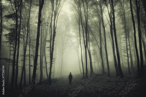 Fotografie, Obraz  haunted forest