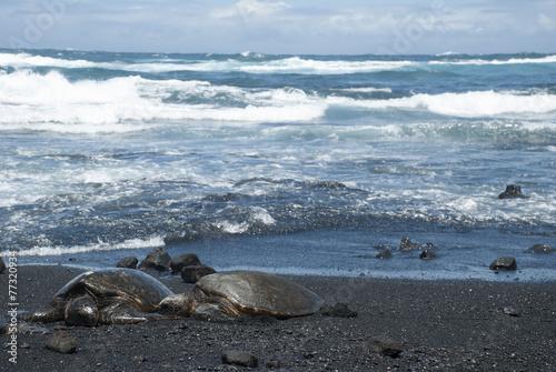 In de dag Schildpad Turtle on Black Sand Beach, Hawaii