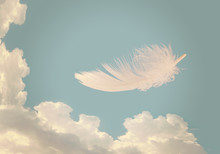 Floating Feather Over Sky - Li...