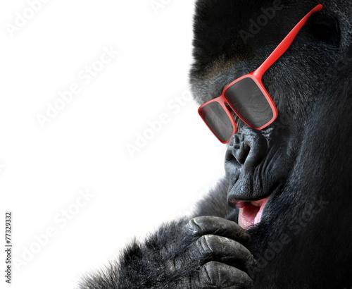 Photo  Unusual animal fashion; gorilla face with red sunglasses
