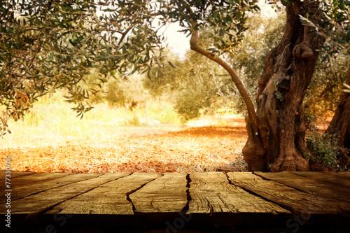 Fotografija  Wooden table with olive tree