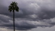 Time lapse of gray storm clouds and palm tree