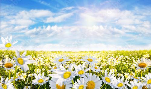 In de dag Madeliefjes Frühlingserwachen: Margeriten-Wiese :)