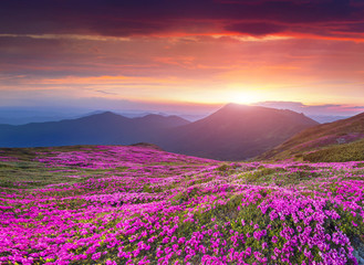 Fototapeta Góry Colorful summer sunrise in the Carpathian mountains