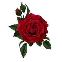 Red Rose Isolated On White With Leaves.