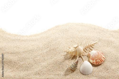 Obraz na plátně  Shells on Beach Sand