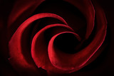 Red Rose Petals Macro - Abstract