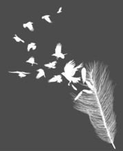 Crows Flying From Feather Silhouette Isolated On Grey