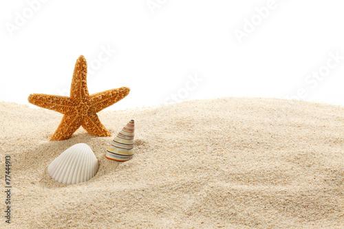 Obraz na plátně  Starfish & Shells on Beach Sand