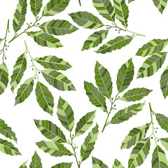 FototapetaSeamless pattern with laurel. Hand-drawn floral background.